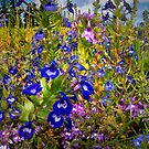 Wildflower Delight by Charles & Patricia   Harkins ~ Picture Oregon