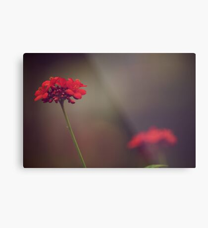 She never alone...: On Featured work: 1.The Groups/chrome-mafia Group 2.Depth-of-field Metal Print