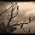 Birds of a Feather by Brian Gaynor