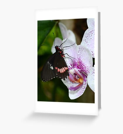 Butterfly enjoying orchids Greeting Card