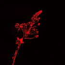 Glowing Red Flowers by glennc70000