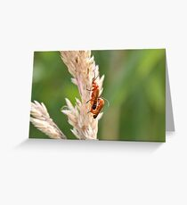Soldier Soldier Greeting Card