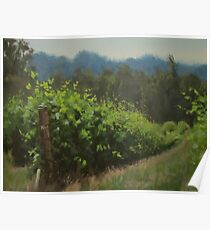 Walk in the Vineyard Poster