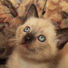 Adopt Me? by Pamela Bates