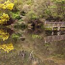 Where Are The Alligators by Malcolm Katon