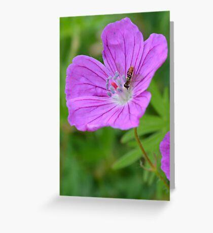 Wild Geranium with little bug Greeting Card