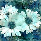 Untitled by Terrie Taylor