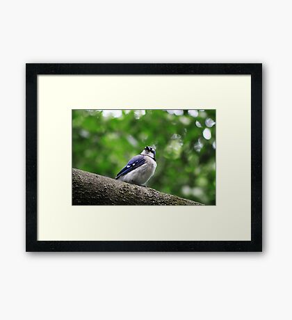 I Hear Something Framed Print