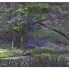 Woodland by David  Kennett