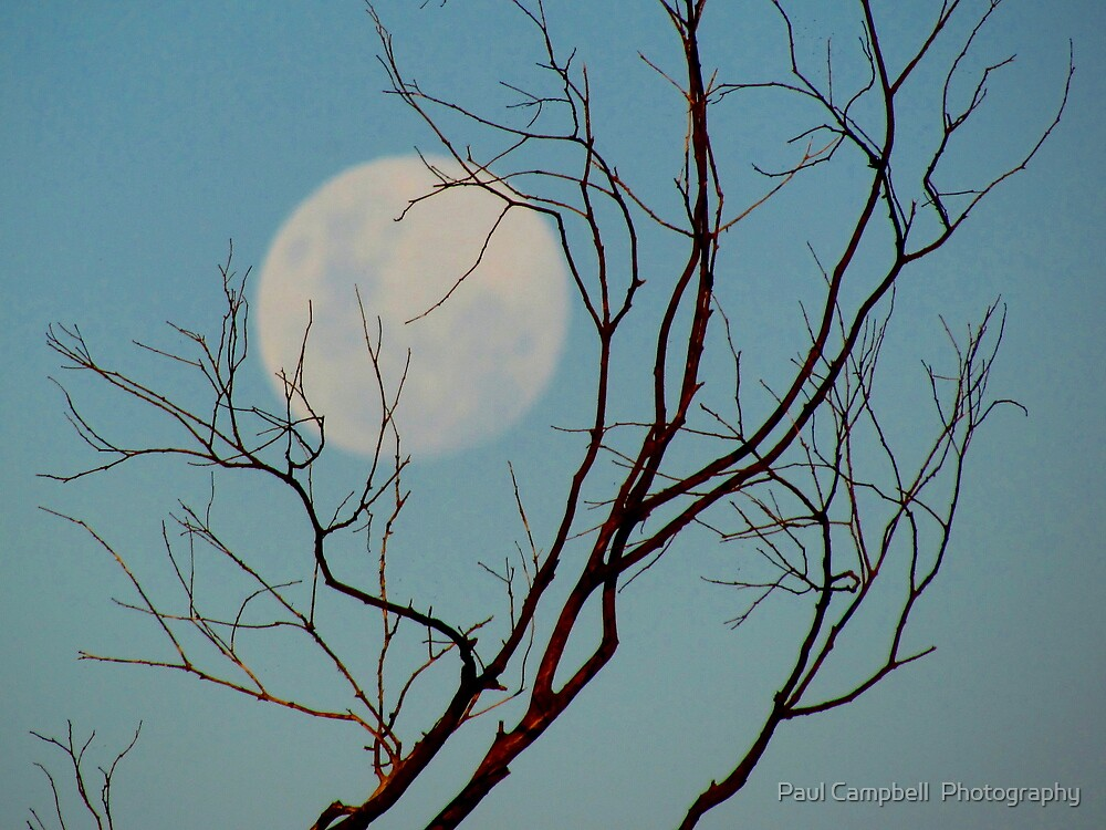The Moon Rising by Paul Campbell  Photography