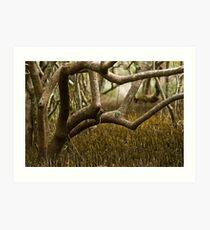 Wetlands at Lake Weyba Sunshine Coast Art Print