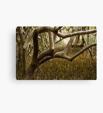 Wetlands at Lake Weyba Sunshine Coast Canvas Print