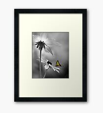 Passion select Framed Print