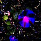 Darkling Flowers by beast