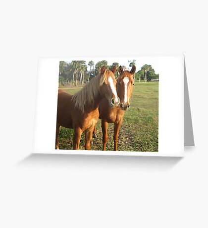 Horse Buddies Greeting Card