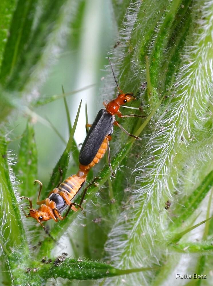 Friendly Bugs by Paula Betz