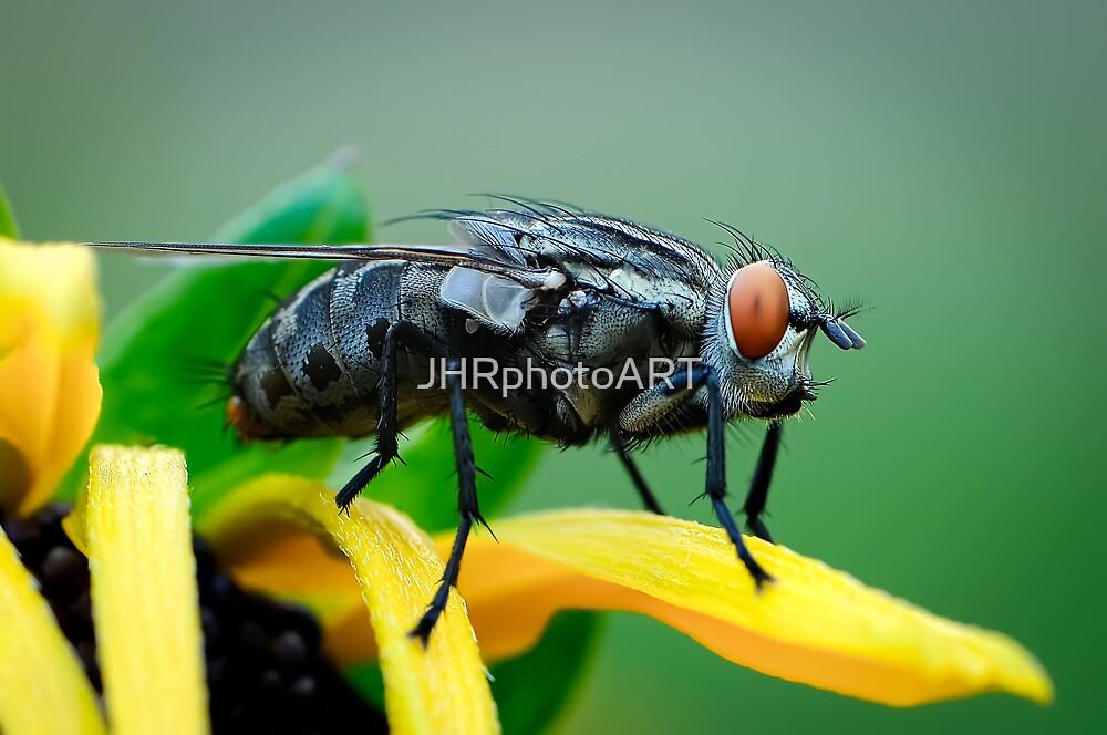 Fly by JHRphotoART