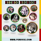 Welcome to Pomskies.com by serenablanks01