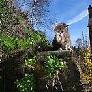 Garden cat by turniptowers