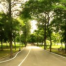 Path Less Traveled - Park Panorama by vanyahaheights