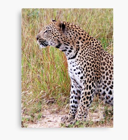 PERFECT CREATION - THE LEOPARD - Panthera pardus Canvas Print