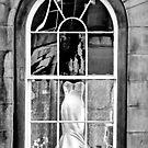 In The Window by Lynne Morris
