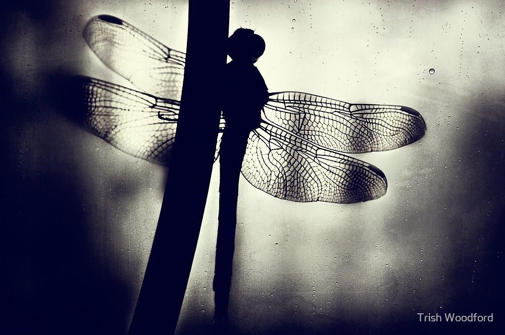 The Geisha Awaits... by Trish Woodford