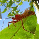 Red Bug by carolinagirl10