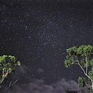 Nighttime, Queensland Bush by Dean Bailey
