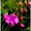 Che bei fiori by AdornmentPhotog