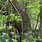 Tree with a twist by BizziLizzy