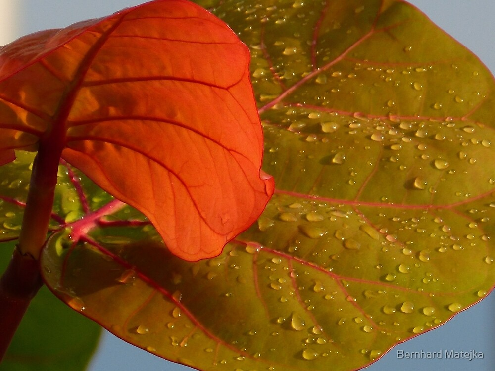 tropical plants - plantas tropicales by Bernhard Matejka