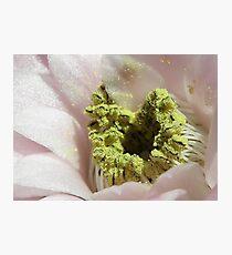 Gymnocalycium mihanovichii super macro Photographic Print