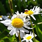 Ladybug and Daisies by jewelsofawe