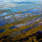 everglades national park by CriGa Photography