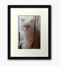 cat nip anyone? Framed Print