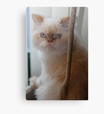 cat nip anyone? Canvas Print