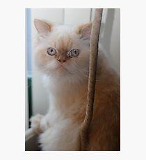cat nip anyone? Photographic Print