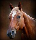 Fox - Quarter Horse by Sandy Keeton