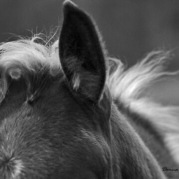 Baby Fuzz Montana foal photo by Donna Ridgway by montanaartist