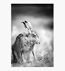 Moon Hare Photographic Print