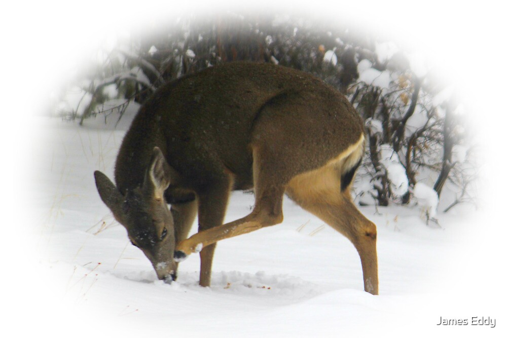 Deer With An Itch by James Eddy
