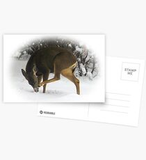 Deer With An Itch Postcards