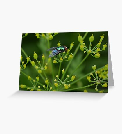Fly Greeting Card