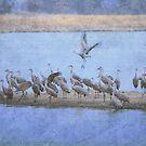 Crane Island by Linda Trine