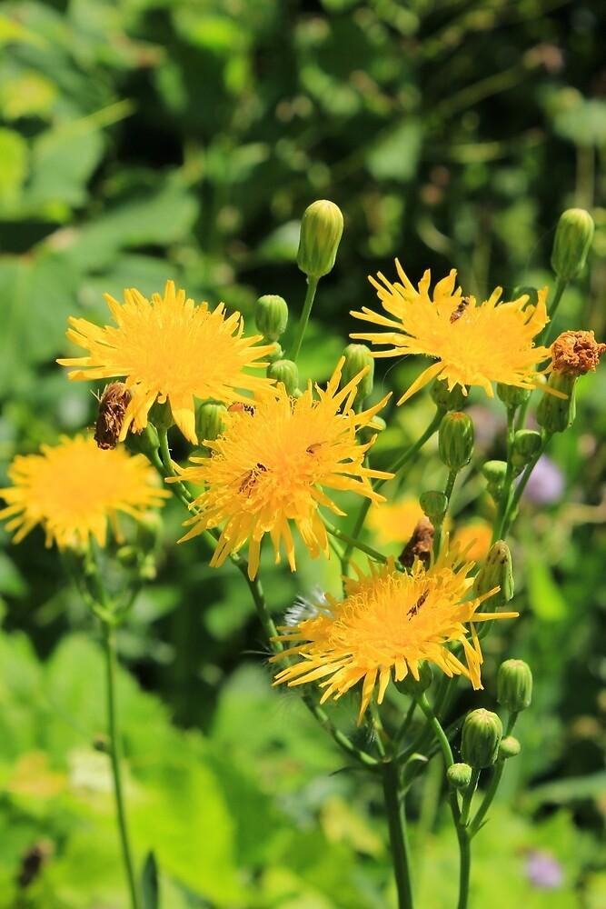 Dandelion Flower in a Garden by rhamm