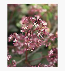 Beauty in Nature Photographic Print