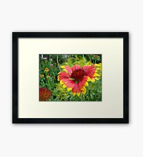 Hot and Spicy Framed Print