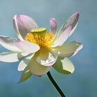 Lovely Lotus by Claudia Kuhn