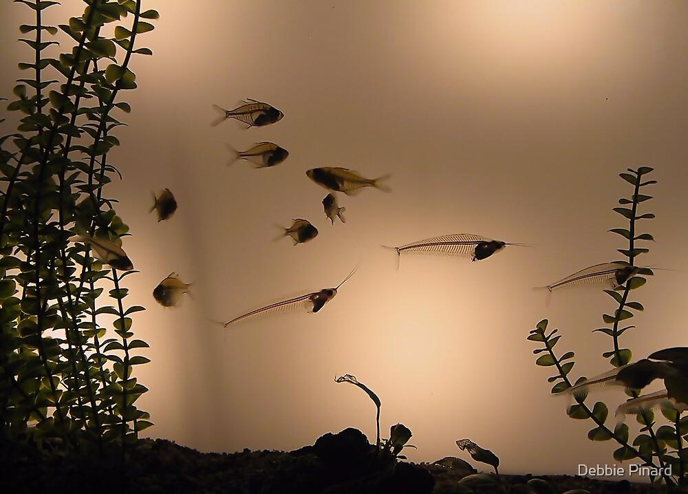 Fish Tank - Seaworld San Diego by Debbie Pinard